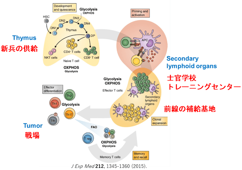 Cancer Immunity Cycleのプログラム